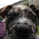 NSW Animal Rescue Foster Puppies 2 by tdierikx