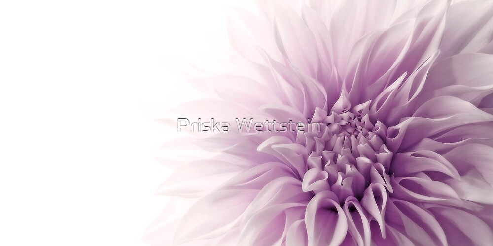 Majesty by Priska Wettstein
