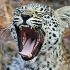 Big yawn before a nap!(I am so tired) by Anthony Goldman