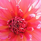 Lady in Pink by Jeri Garner