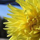 Yellow Dreams by Jeri Garner