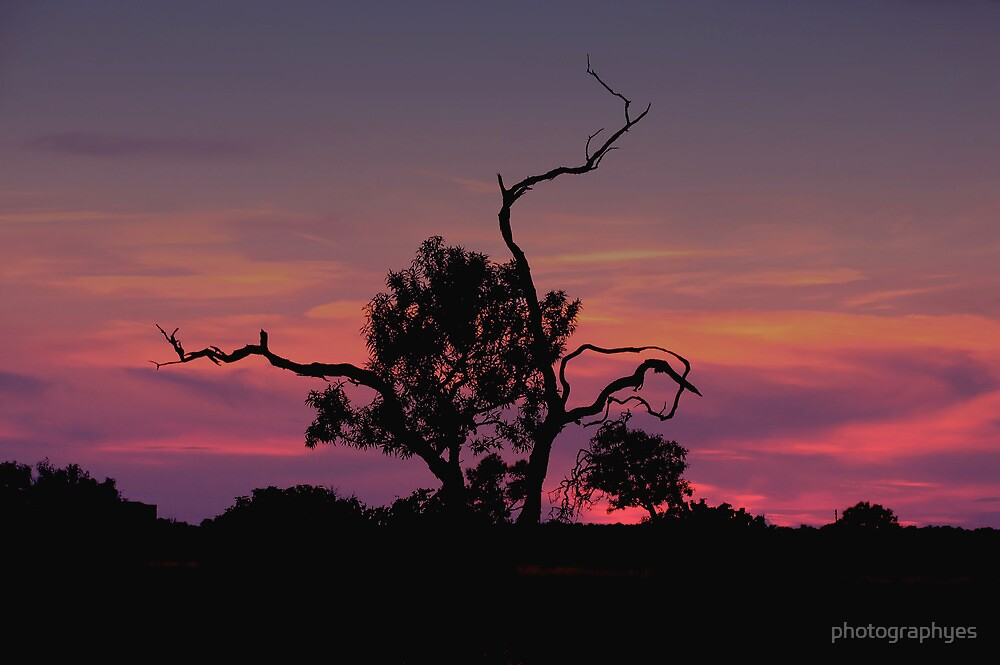 Lonely Olive Tree at Sunset  by photographyes