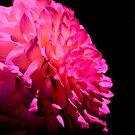 Flower in Pink by Jeri Garner