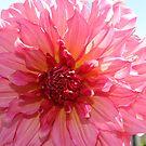 Full Bloom by Jeri Garner