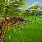 Palm and Paddy by Werner Padarin