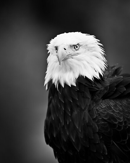 Symbol of America by Peter Denness
