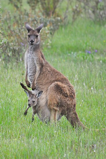 Mum & Bubs by Ian Berry