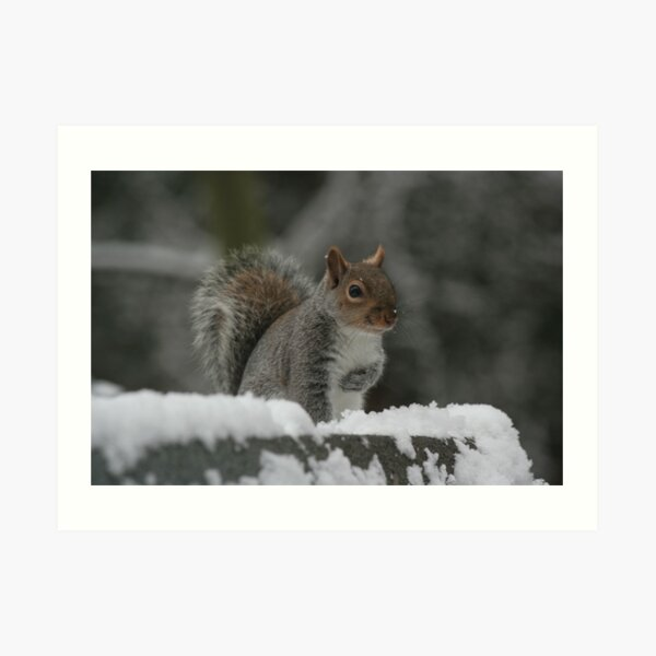 Squirrel 7 Art Print
