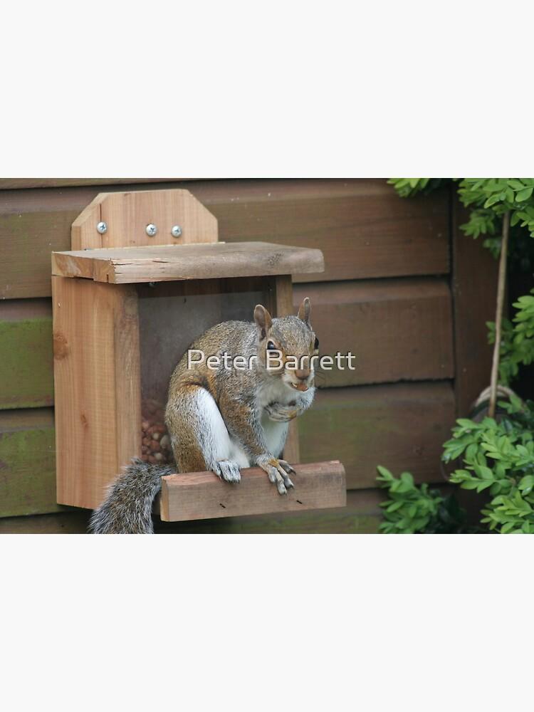 Squirrel 8 by hartrockets