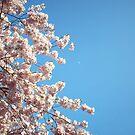 Cherry Tree by Sarinilli