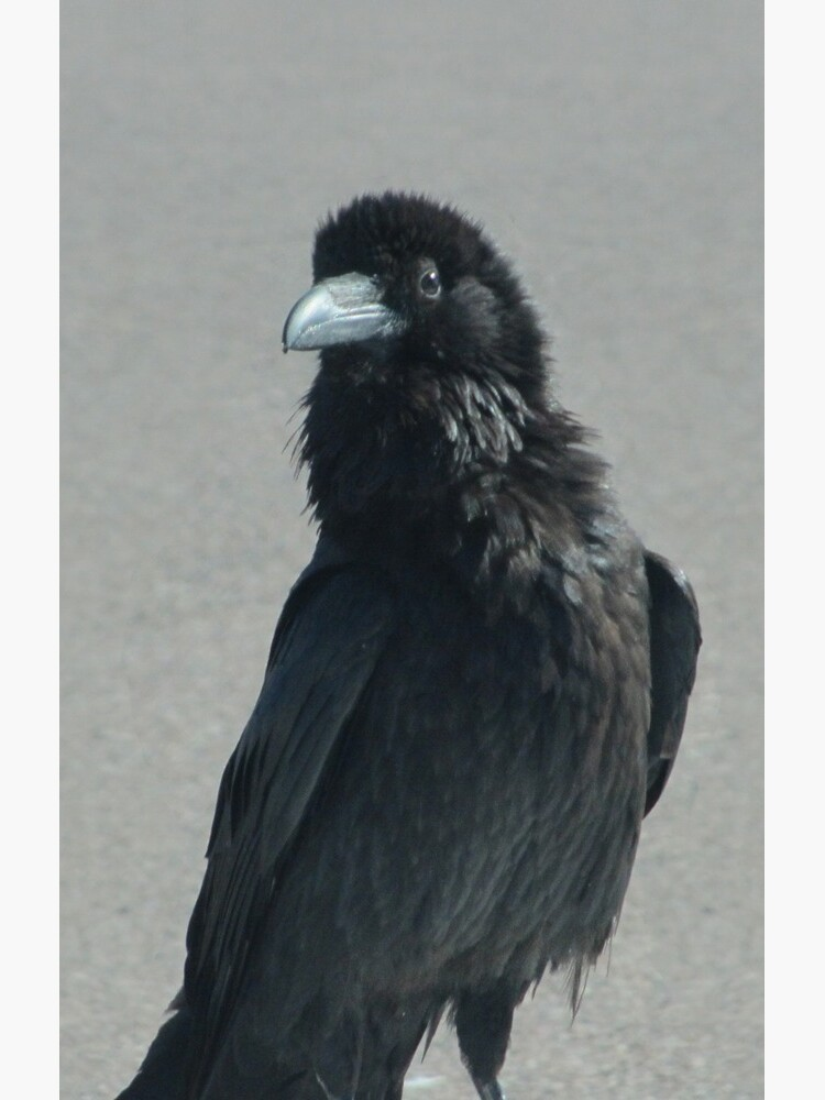 Lone Raven by Sarinilli