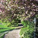 Sakura Park by Sarinilli