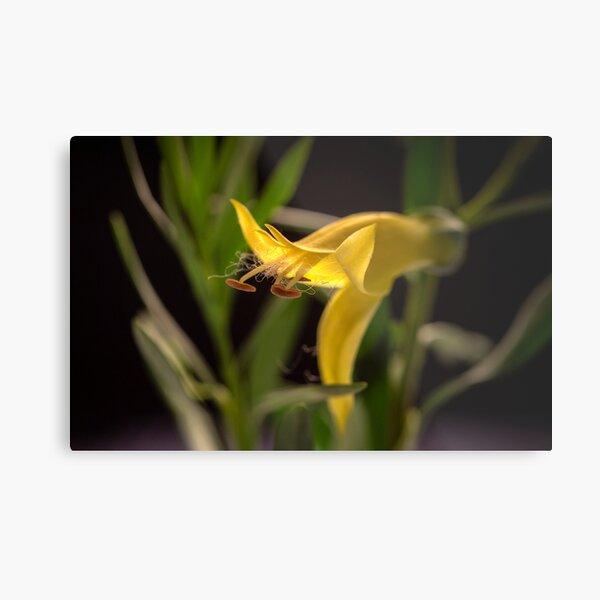 sunshine yellow budding flower Metal Print