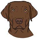 A Chocolate Labrador Retriever  by rmcbuckeye