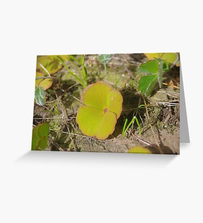 Nardoo Greeting Card