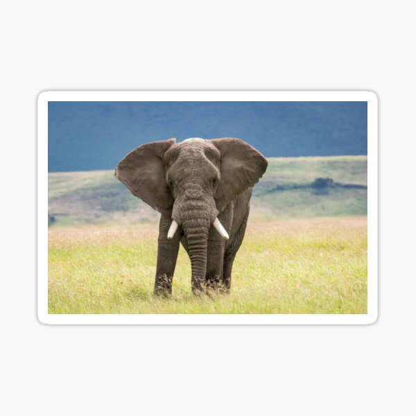 Elephant, Ngorongoro Crater, Tanzania Sticker