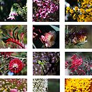 Western Australian Wildflowers by Andreas Koepke