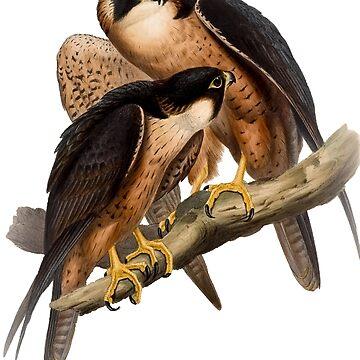 falco peregrinator by marmur