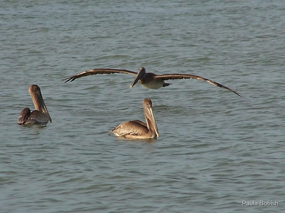 Pelicans at Sanibel by Paula Bobish