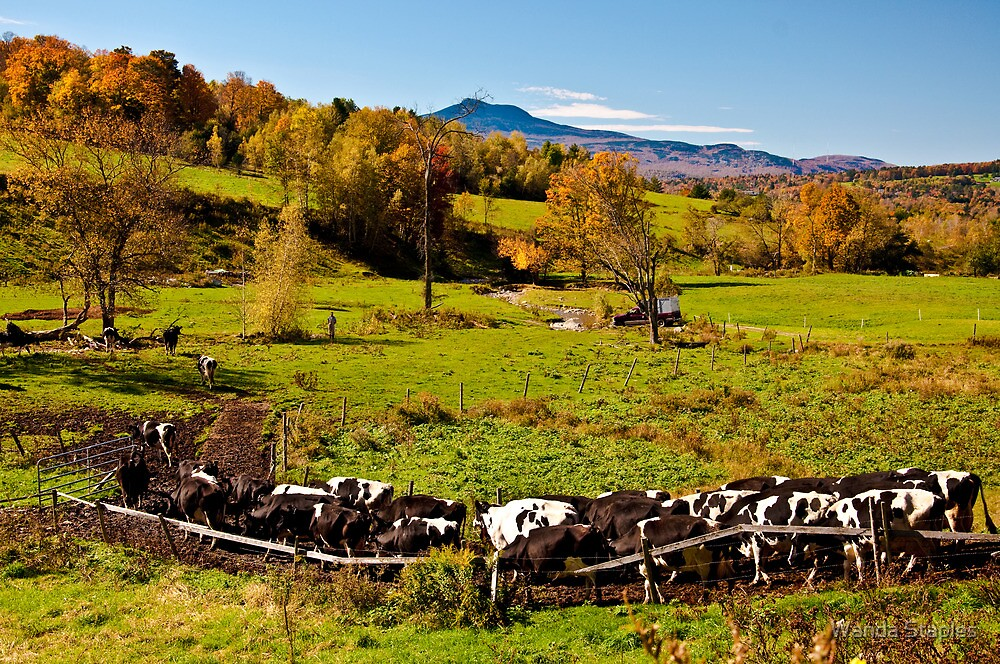 Farming in Vermont by Wanda Staples