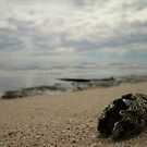 Washed Up - Dunes Beach  by cookieshotz