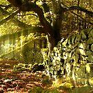 Spooky Wall by skaranec1981