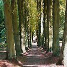 Distant Autumn by Liam O'Brien