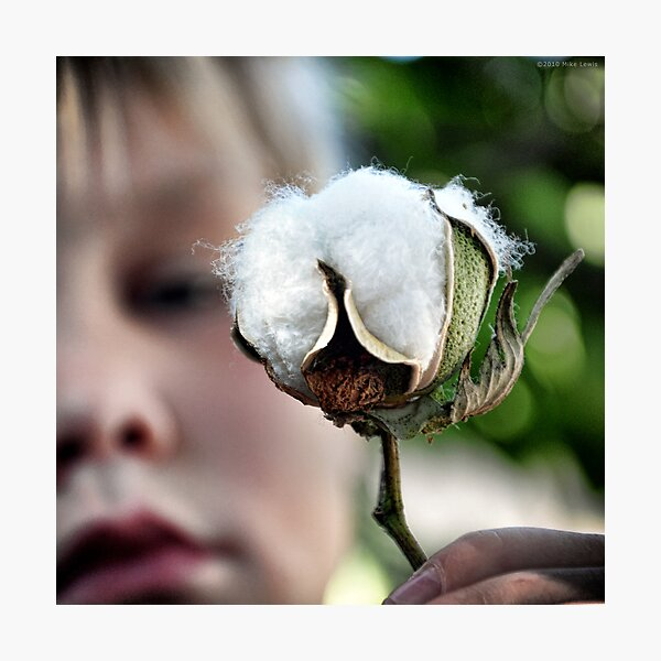 Pima Cotton Photographic Print