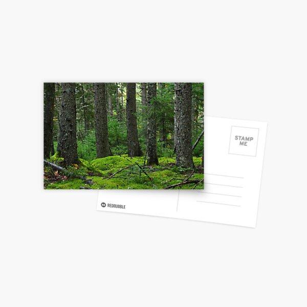 Acadia National Park Phootgraphy 001 Postcard