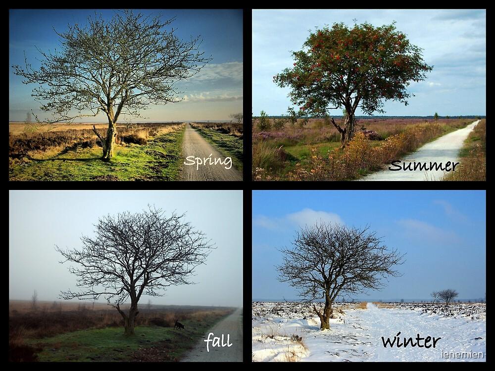 Tree and Seasons Change by ienemien