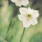 Verträumte Blumen von Brixhood
