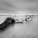 Connellys Marsh, Tasmania by Alex Wise