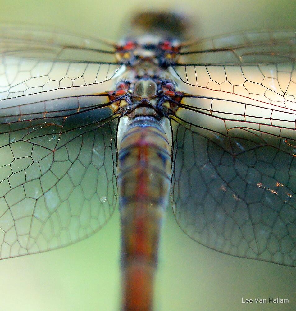 Dragons wings by Lee Van Hallam