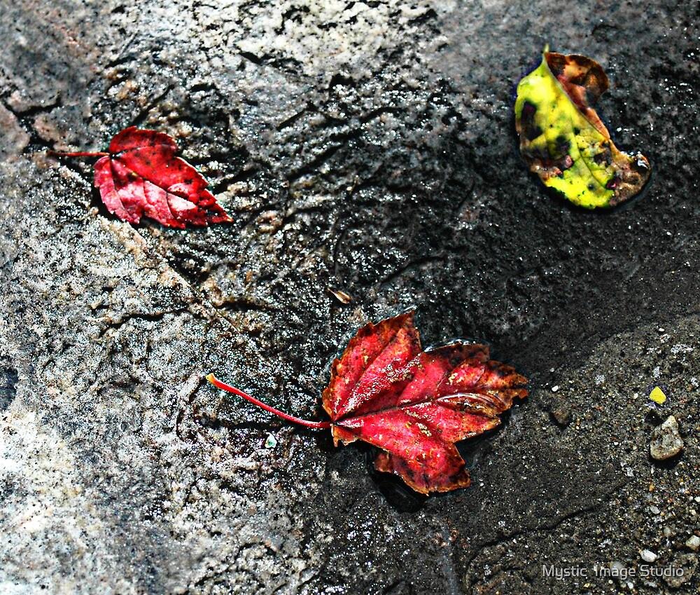 Three Leaves by OntheroadImage