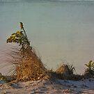 Sunrise at Plumb Beach by Jean-Pierre Ducondi