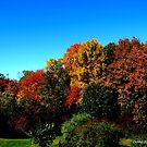 Gorgeous in Griswold by Debbie Robbins