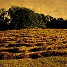 Golden Hayfield by Debbie Robbins