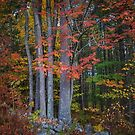 Autumn in Maine by Colleen Drew