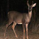 Deer in the Park by elisab