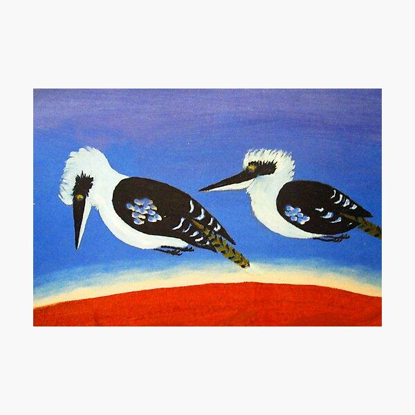 THE SHORT-SIGHTED BLUE WINGED KOOKABURRA (AUSTRALIA) Photographic Print
