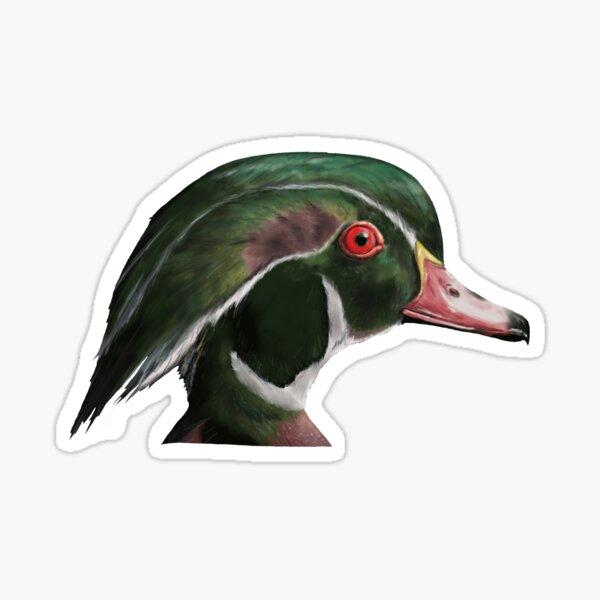 Drake Wood Duck Sticker