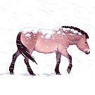 Przewalski's Horse by Tami Wicinas