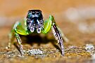 Green Jumper by Normf