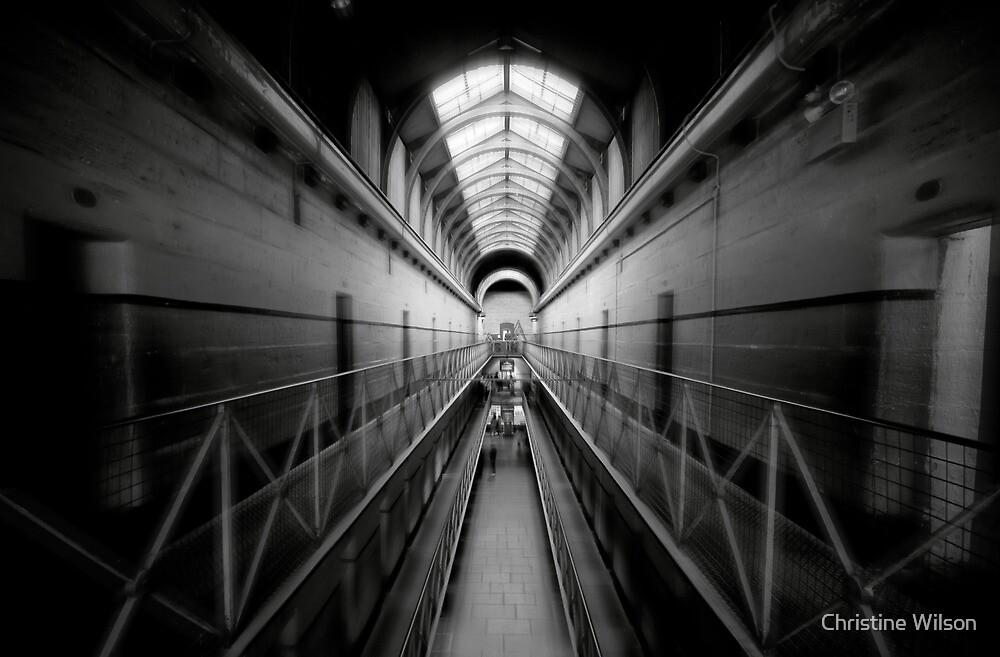 Haunted Halls  by Christine Wilson