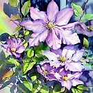 Sunlit Clematis  by Ann Mortimer