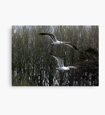 Formation Flying Canvas Print
