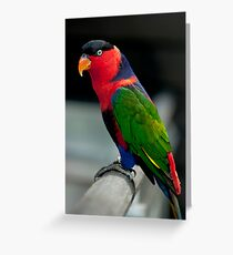 Black Capped Lory Greeting Card