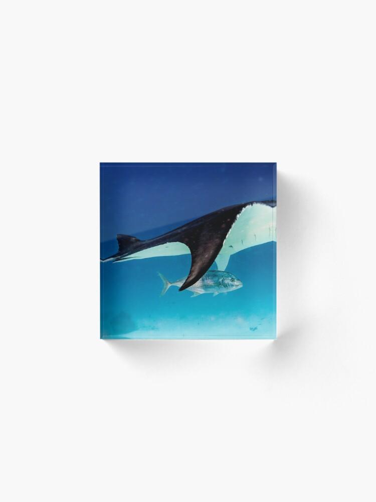 Alternate view of Manta companion Acrylic Block