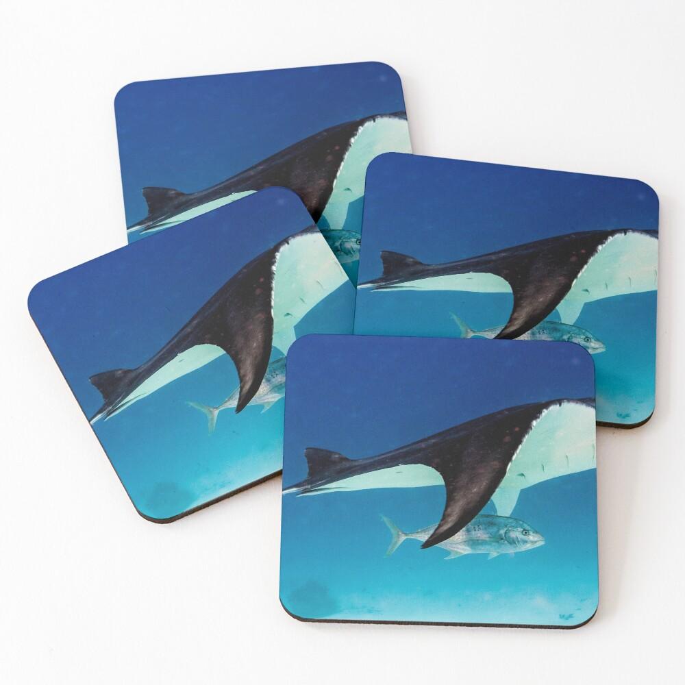 Manta companion Coasters (Set of 4)