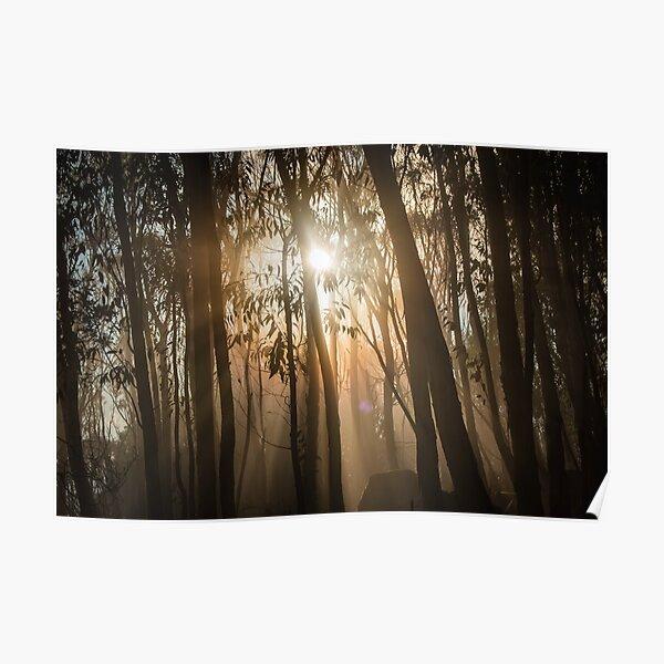 Mount Macedon Fog Through the Trees Poster